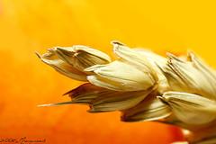 Alimentos ricos en fibras para bajar de peso alimentos que contienen fibra para adelgazar - Alimentos que contengan fibra ...
