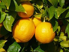 Propiedades del limón para adelgazar