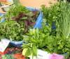 Riesgos del consumo infantil de plantas adelgazantes