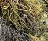 Beneficios del agar agar para adelgazar y desintoxicar