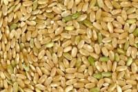 arroz yamani 300x200