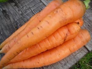 zanahorias 300x225