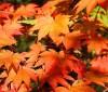 5 alimentos de otoño para perder kilos de más