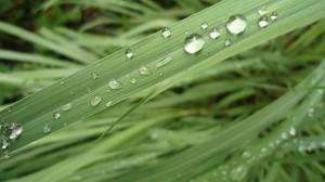 lemongrass 300x168