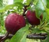 Dieta para eliminar grasa con vegetales rojos, verdes y naranja