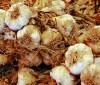 Batido de col y ajo que depura y quema grasas