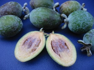 640px-Ripe_Guava_on_blue