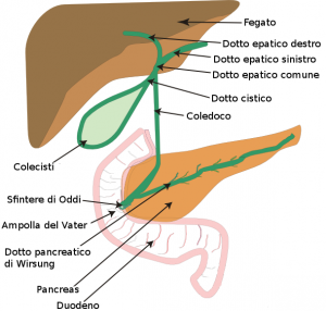 Biliary_system_new-it