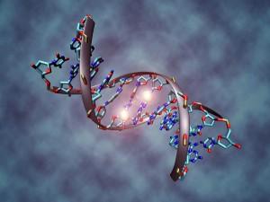 800px-DNA_methylation