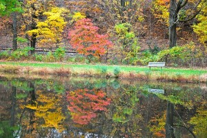 1024px-Autumn_Colours_02