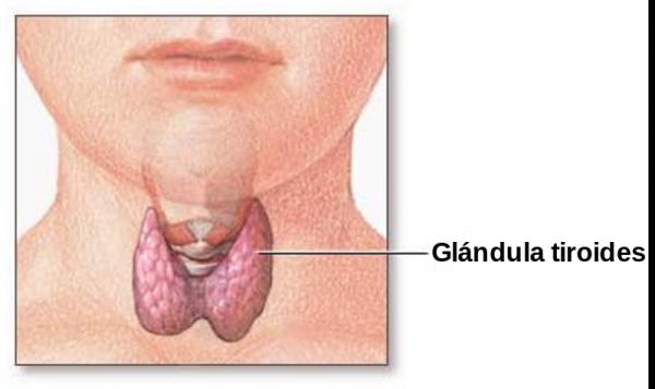 Tratamientos para la obesidad de causa hipotiroidea